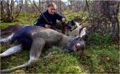 Helmer og elgen
