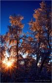 Noen trær i skogen -) DSC_0020